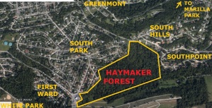 Haymaker Forest
